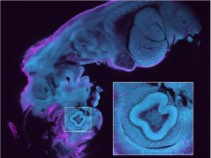 Cutting-edge advancements in microscopy