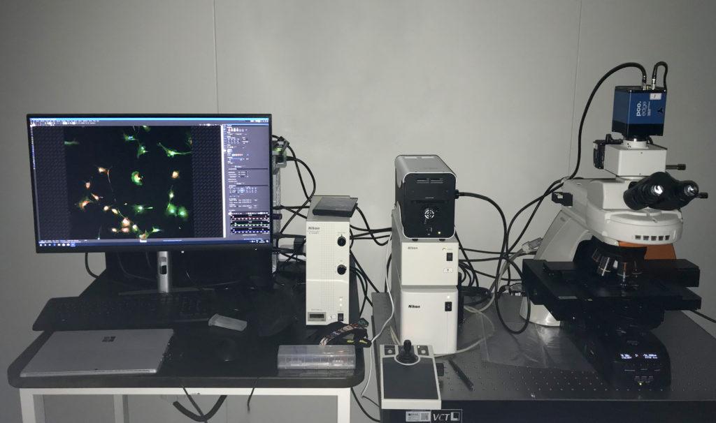 pE 800 Huida Gene
